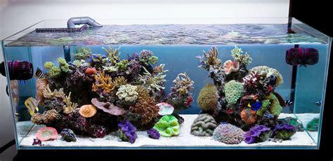 design marine aquarium aquarium design group aqua design amano 120 p overflow