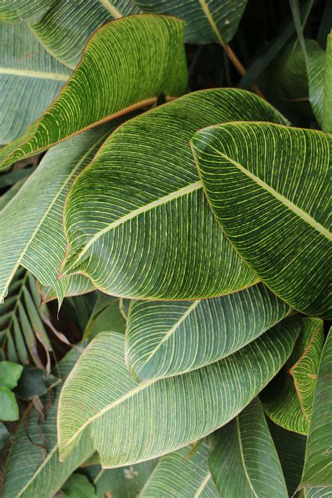 green heart shape leaf  stock photo