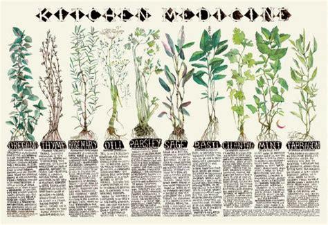 medicinal herb chart herbalism medicine moon to moon etsy focus kitchen medicine and moon