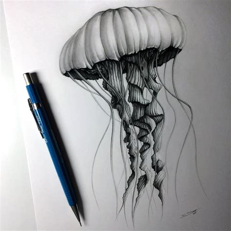 Drawing Jellyfish by Jellyfish Drawing By Lethalchris On Deviantart
