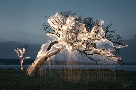 how many lights per of tree light drips from trees in exposure photos by vitor