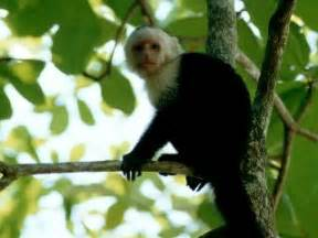 What Animals Live In The Canopy Layer by The Amazon Rainforest My World