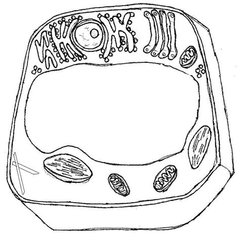 Sketch Of Ribosomes Coloring Pages Plant Cell Coloring