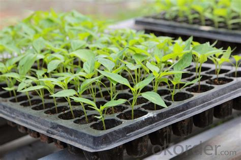 Buy 128 Cells Cheap Tomato Seedling Plug Seed Tray Price