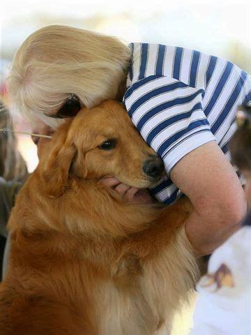 rhonda hovan golden retrievers understanding cancer in golden retrievers golden