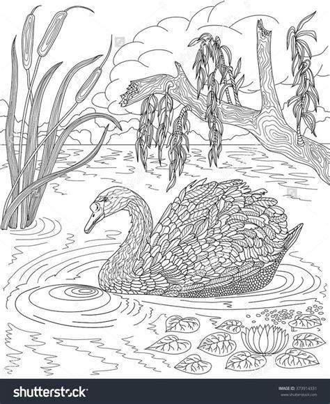 hand drawn bird swan swimming   lake  reeds