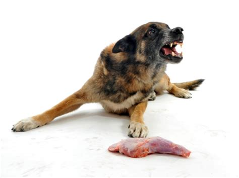 food aggression in dogs how to combat food aggression