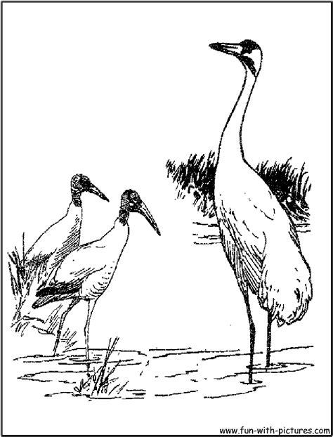 coloring pages of water birds waterbirds coloring page