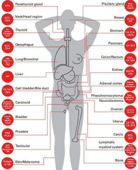 Pattern Analysis Of Tumor Markers | tumor markers scientific pinterest markers medical