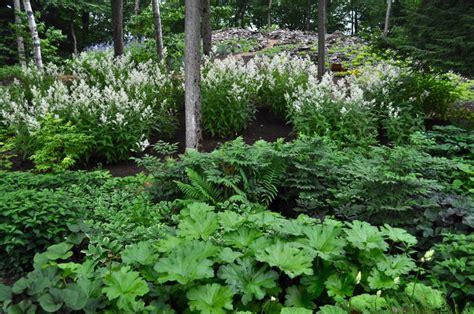 Plant Lover S Garden Hyland Garden Design Flowers For Shade Gardens
