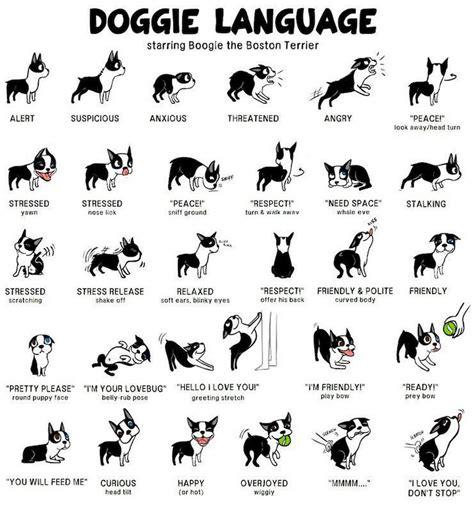 puppy language road s end papillons language
