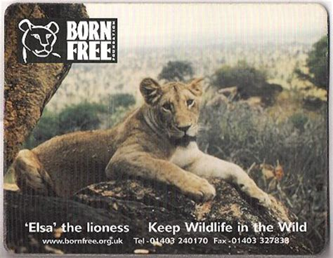 elsa film lioness collectibles from born free elsa adamsons