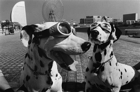 elliott erwitts dogs 3832769242 elliott erwitt quando la fotografia accade giulia guidobaldi