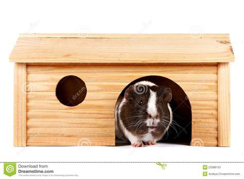 guinea pig house plans guinea pig house plans house plans guinea pigs and suits on rabbit hutch guinea pig