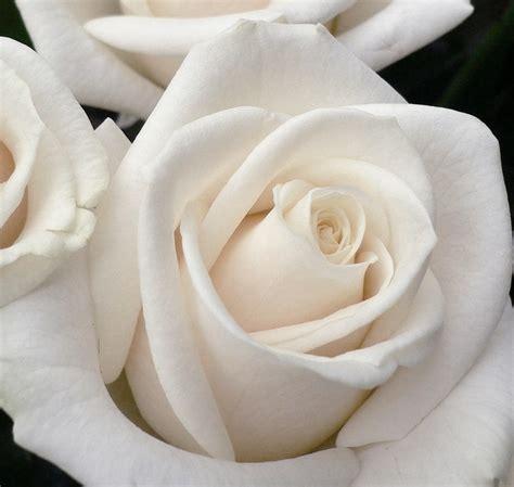 quanto costano i fiori di bach purity the bach flowers