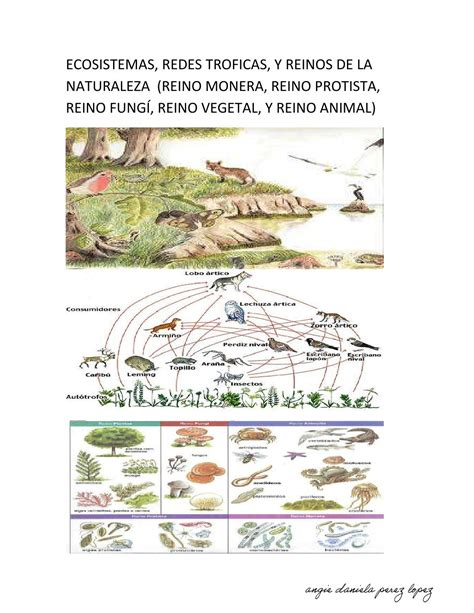 cadenas troficas clasificacion ecosistemas redes troficas y reinos de la naturaleza