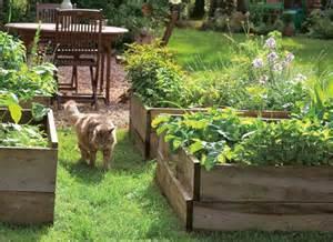 cultiver un potager au carr 233