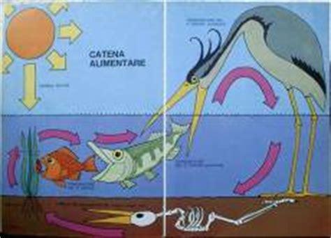 catena alimentare dello stagno telefree it 187 webzine 187 187 salvare l ambiente si pu 242