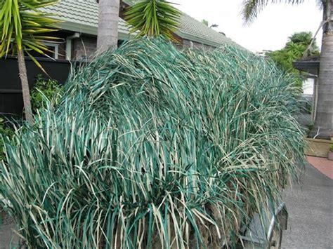 Avery Real Grass Mats by Prairiewind Decoys Real Grass Mats Early Season Green