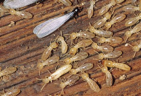 wood destroying insect certification termite inspection home spectors inspection services