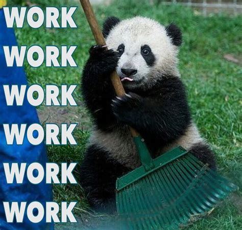 Cute Panda Memes - 450 best panda bears images on pinterest giant pandas
