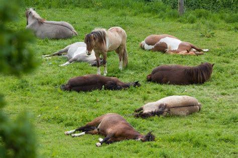 pfeifen beim ausatmen im liegen wie schlafen pferde was ist was