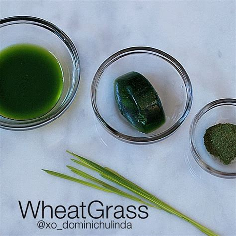 Wheatgrass Detox Liver by 88 Best Wheatgrass Images On Health Foods