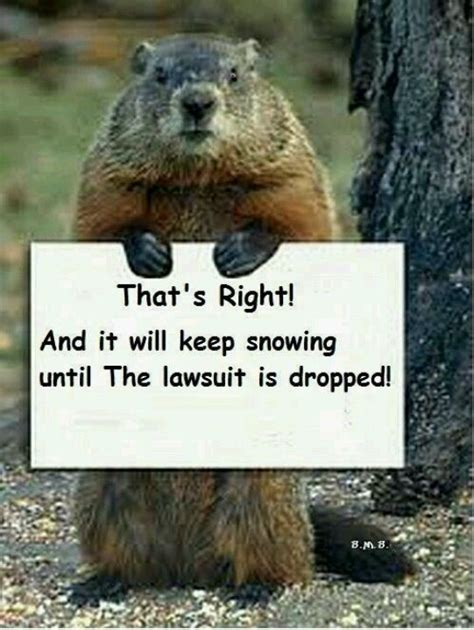 7 Reasons I Groundhog Day by 11 Best Images About Happy Groundhog Day On