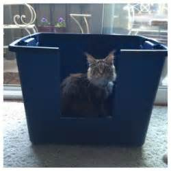Storage Container Litter Box - litter boxes for high spraying cats