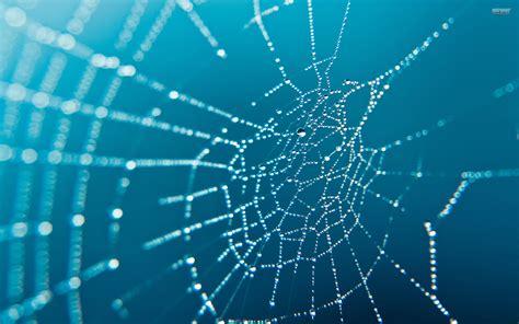 spider web photos weneedfun spider web photos weneedfun