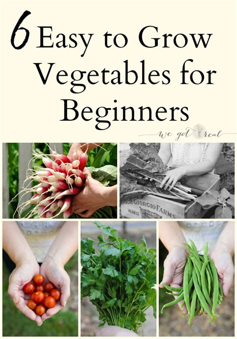vegetable gardening how to grow vegetables the easy way books 6 easy to grow vegetables for beginners we got real