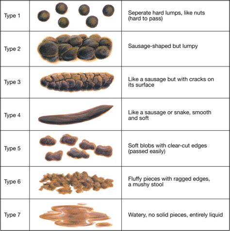 Causes For Thin Stools by What Does An Ideal Bowel Movement Look Like Brown Hairs