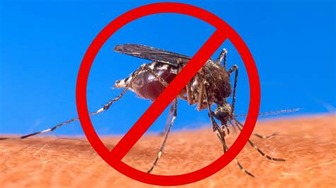 how to keep mosquitoes out of house how does mosquito repellent works health fundaa