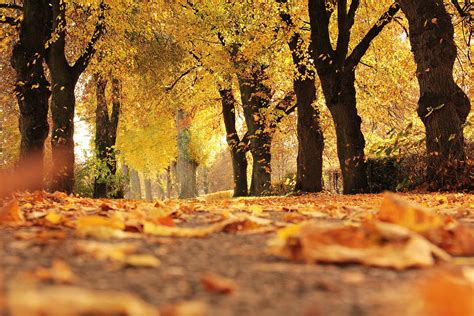 fall leaves   leaves change color   fall   farmers almanac