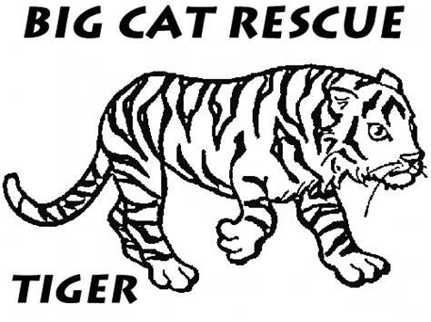 coloring pictures of big cats coloring pages