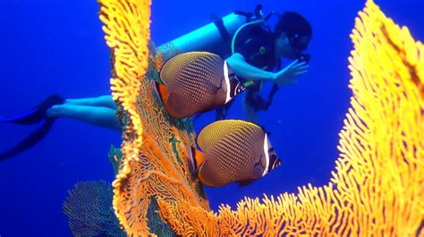 dive tours phuket scuba diving tours local dive thailand