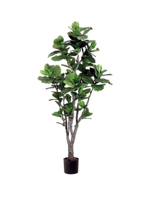 easiest indoor plants fresh easy to care for houseplants that improve the