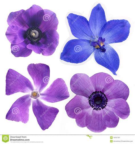 imagenes de flores llamadas violetas flores violetas fotografia de stock royalty free imagem
