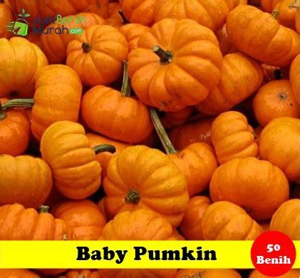 Benih Tanaman Pappermint Isi 50 Maica Leaf benih baby pumpkin maica leaf jualbenihmurah