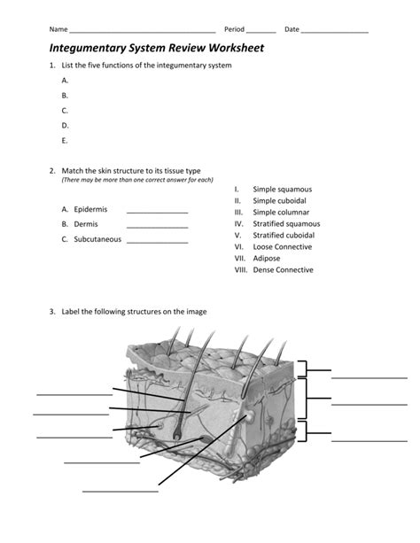 Integumentary System Worksheet Answers by Uncategorized Integumentary System Worksheets