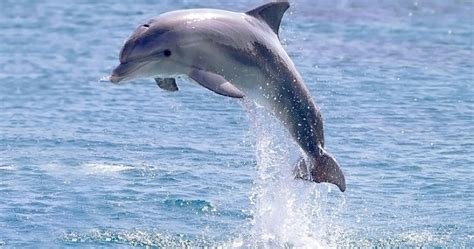 dolphins a kid s book of cool images and amazing facts about dolphins nature books for children series volume 5 books dolphin facts and pictures for cool2bkids