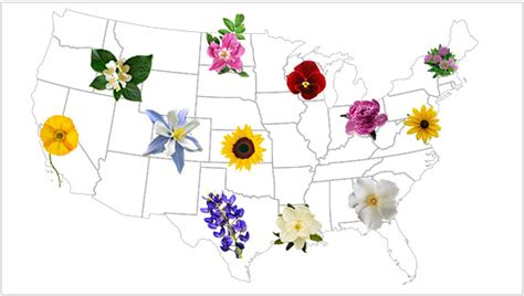 list of state flowers find offical state flower for usa teleflora