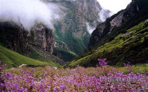 Flower Valley 1280 800 Wallpaper | flower valley 1280 800 wallpaper
