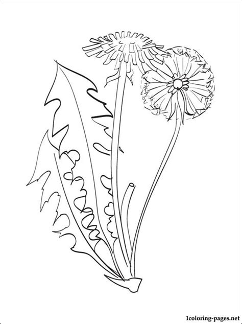 dandelion color related keywords dandelion color long