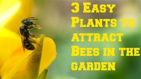 how to get rid of bees in backyard how to get rid of bees in backyard 28 images getting rid of bee s and wasp gardening and