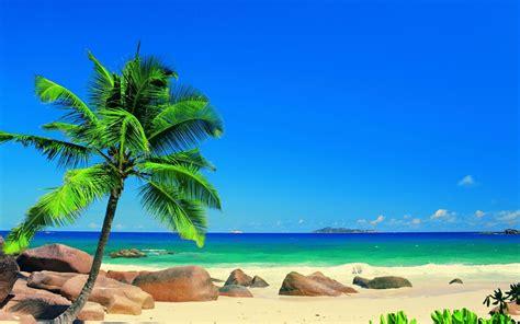 sand landscapes sea palm trees sky tropical