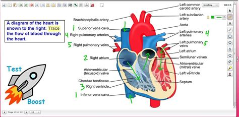 blood flow through the diagram step by step blood flow through the test boost for sat subject