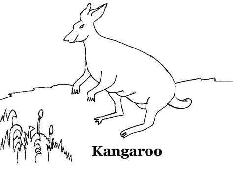 kangaroo coloring pages pdf kangaroo coloring printable page for kids