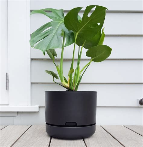 mr kitly decor self watering plant pots cool hunting monstera deliciosa cool indoor plant plantandpot nz