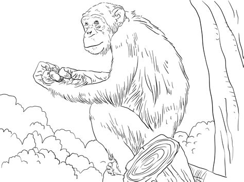free printable chimpanzee coloring pages for